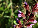 Bee in flight - Mindfulness